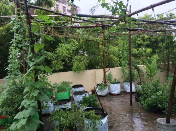 Rooftop garden in urban Chennai