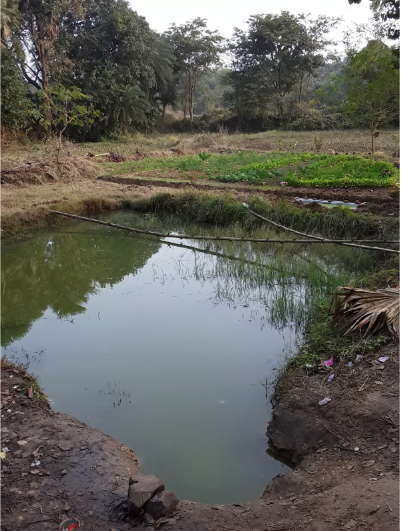 Small farm ponds irrigate diverse vegetable gardens and perennial hedgerows, enhancing water and food security.